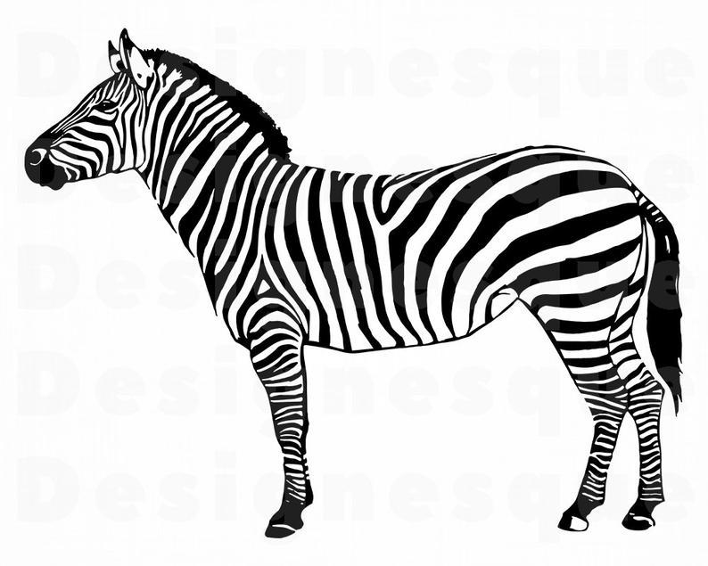 Svg files for cricut. Clipart zebra pichers