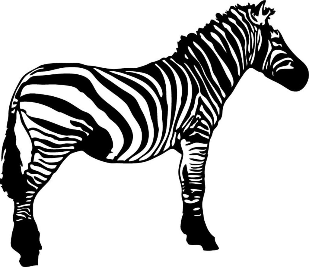 Clip art transprent png. Clipart zebra wildlife