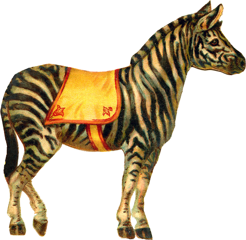 Clipart zebra zabra. Zibi vintage scrap cyrk