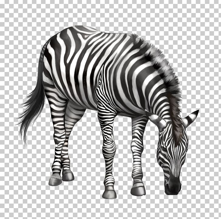 Clipart zebra zebra bow. Drawing png animals black