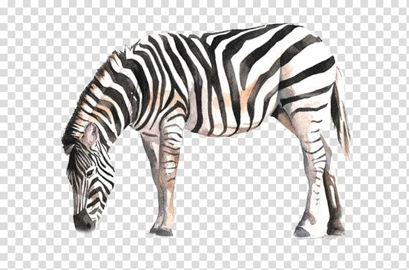 Clipart zebra zebra bow. Horse watercolor painting drawing