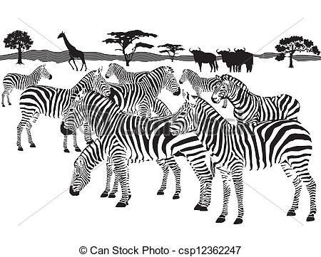 Eps vector of zebras. Clipart zebra zebra herd