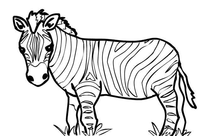 Clipart zebra zebra outline. Png free transparent