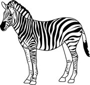 Free black and white. Clipart zebra zebra outline