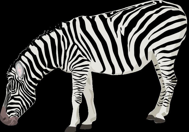 Print panda free images. Clipart zebra zebra stripe