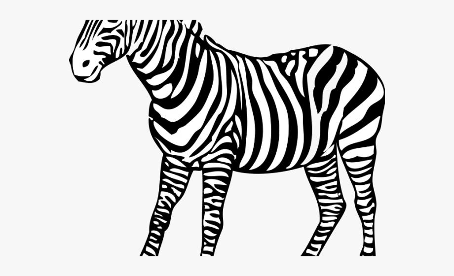 Clipart zebra zebra stripe. Drawing outline free