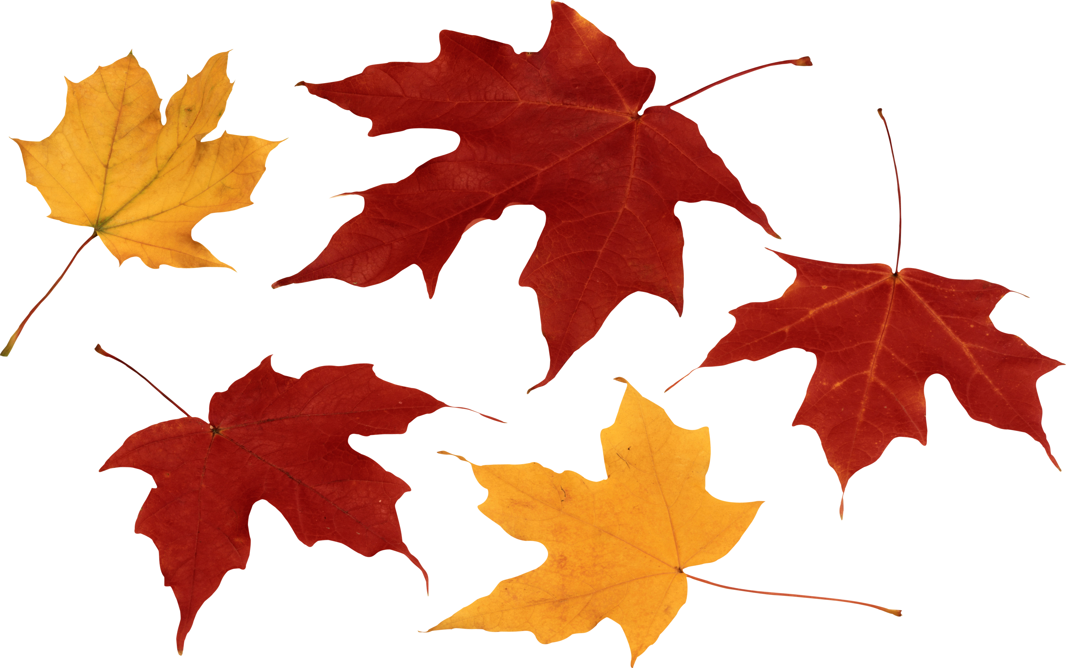Clothes clipart autumn. Leaves eight isolated stock