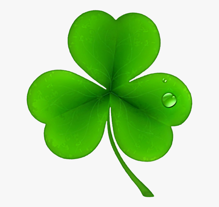 St patricks day shamrocks. Clover clipart