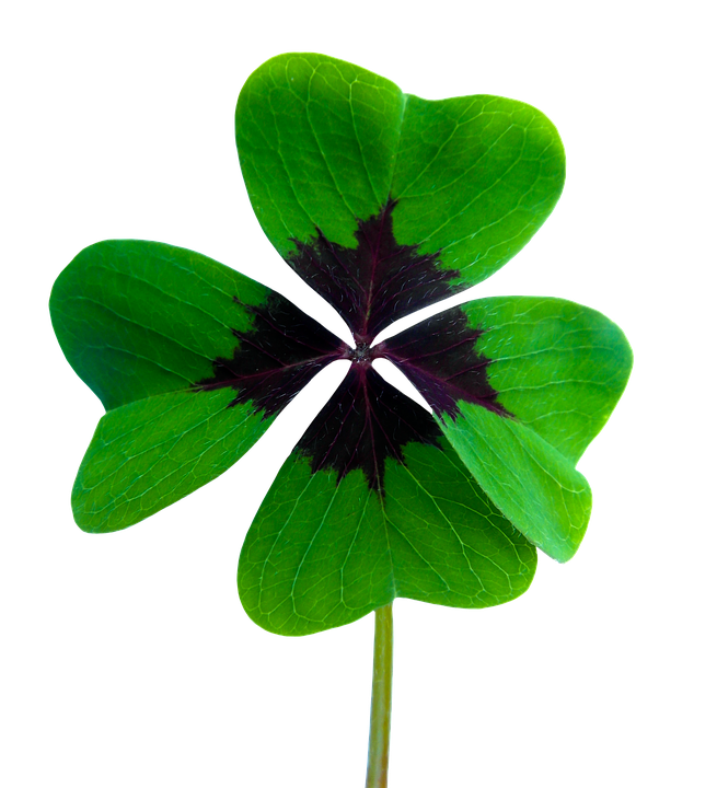 Clover clipart jpeg. Png shop of library