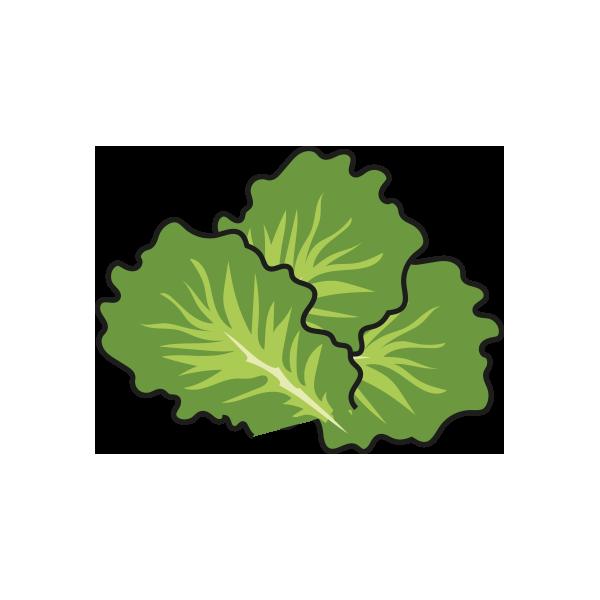 Lettuce clipart lettuce slice. Revealed the cost of