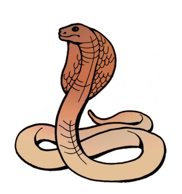 Cobra clipart.