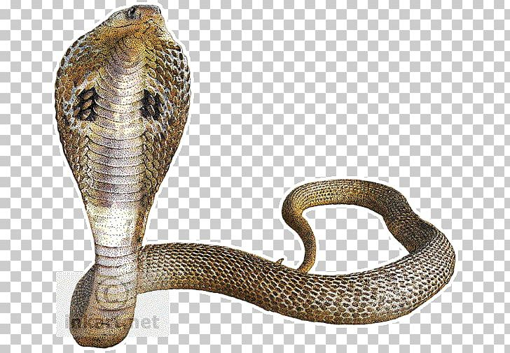 Indian king png animals. Cobra clipart big snake