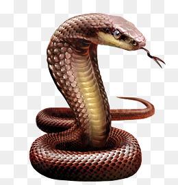 Cobra clipart big snake. Download free transparent png