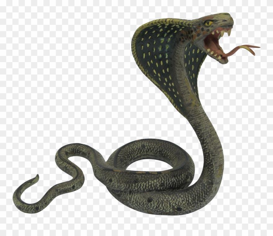Png transparent background . Cobra clipart coiled snake