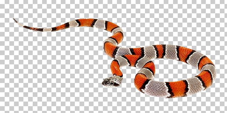 Cobra clipart dangerous snake. Coral reptile milk png