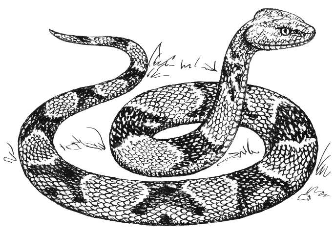 Cobra clipart fierce snake. Free cliparts download clip