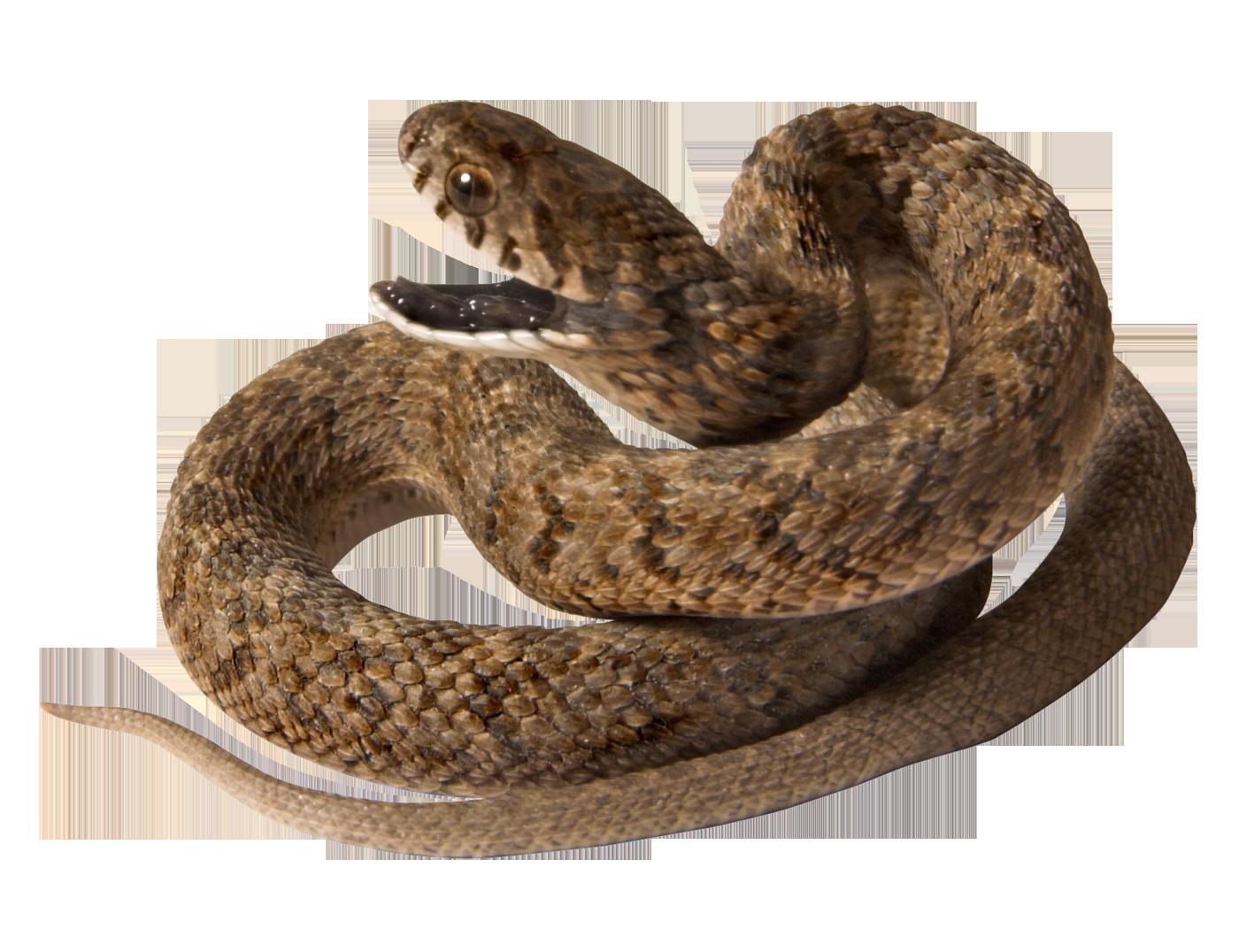 Png animal pinterest. Cobra clipart fierce snake