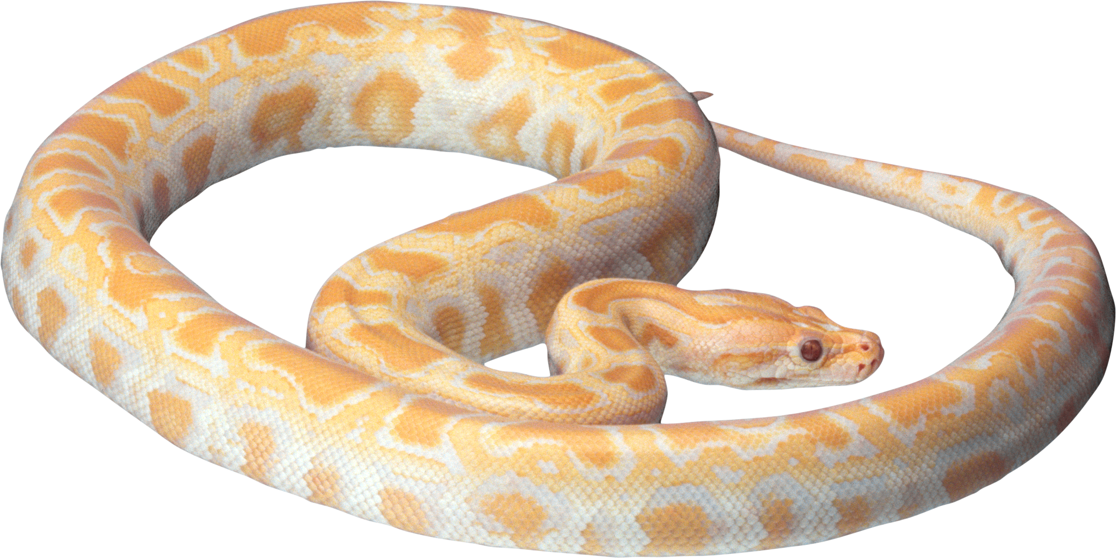 Png animal pinterest. Tooth clipart snake