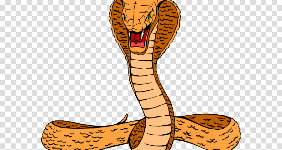 Cartoon snakes drawing font. Cobra clipart poisonous snake
