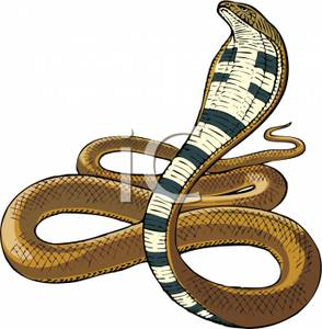 King royalty free picture. Cobra clipart realistic