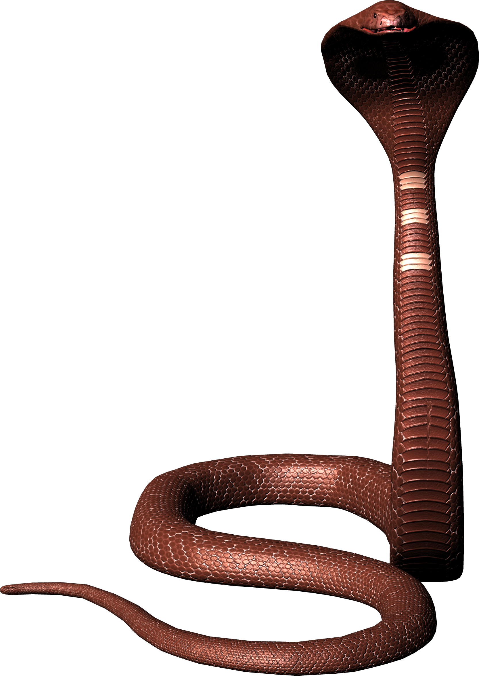Snake png image free. Cobra clipart realistic