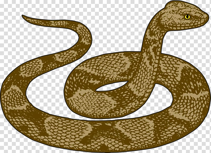 Free content python transparent. Cobra clipart scary snake