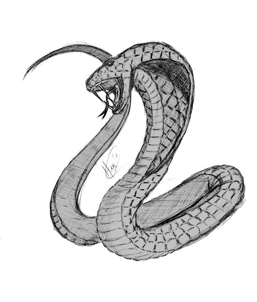 Cobra clipart sketches. Free drawing download clip