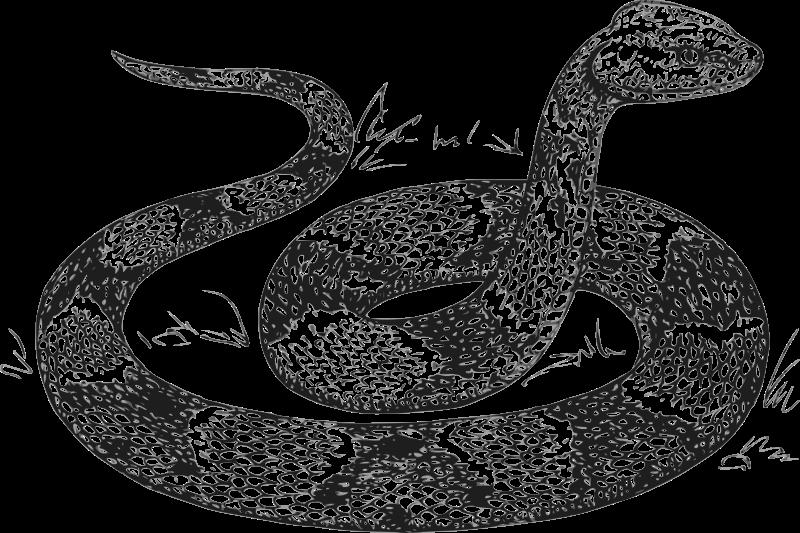 Royalty free images org. Cobra clipart snake animal