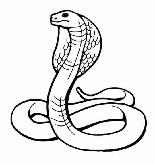 Cobra clipart snake egyptian. Uraeus the symbols and