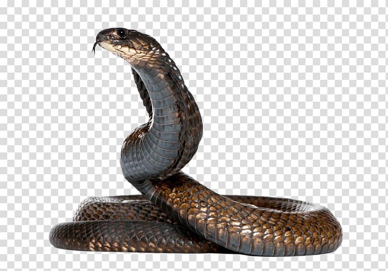 Cobra clipart snake egyptian. Brown illustration king
