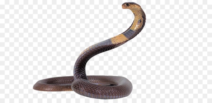 Snakes portable network graphics. Cobra clipart snake pit