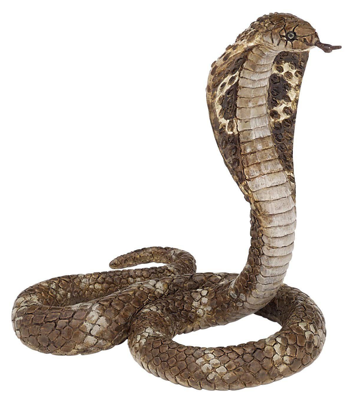 Cobra clipart sneck. Snake png images transparent
