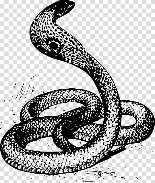 Cobra clipart spitting cobra. Snake drawing king red