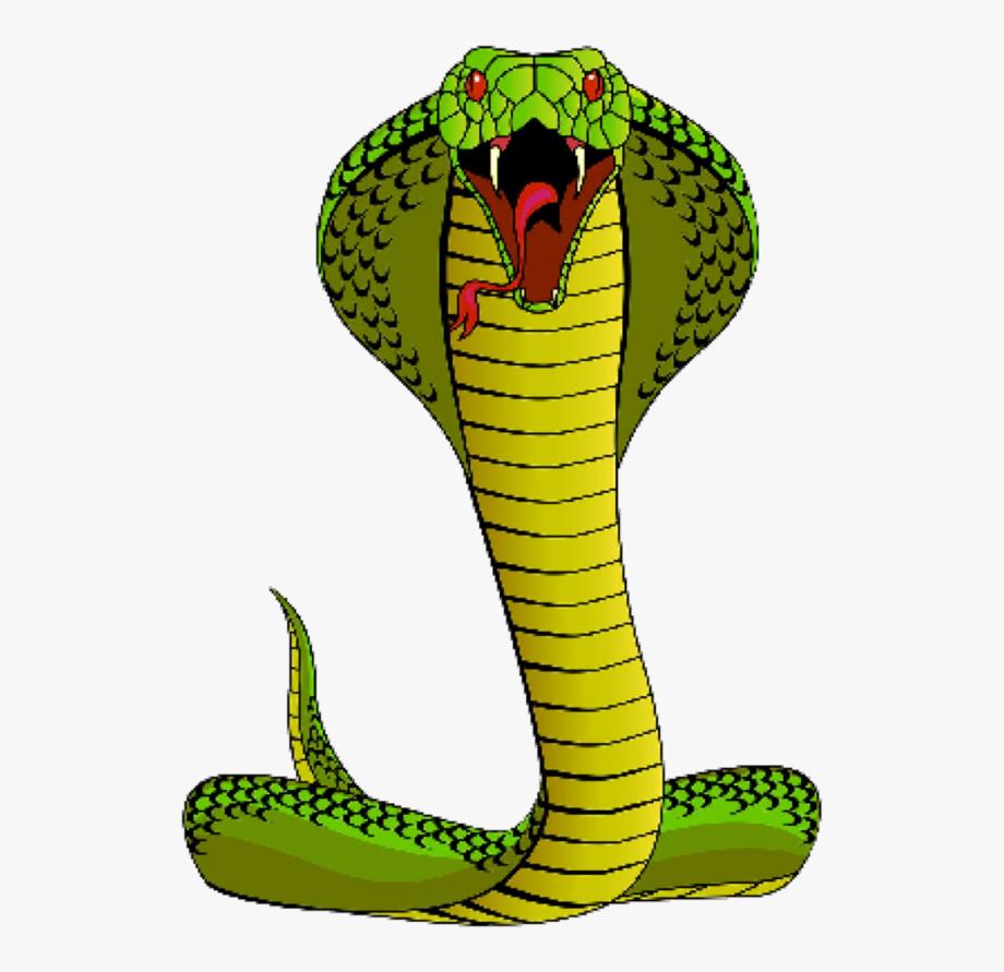 Snake cliparts . Cobra clipart spitting cobra