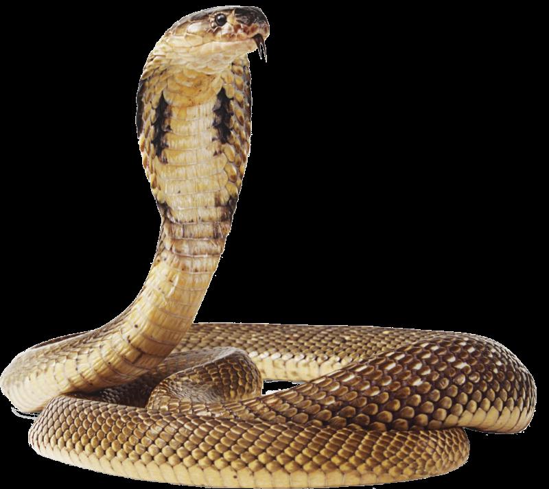 Cobra clipart standing. King deviantart free on