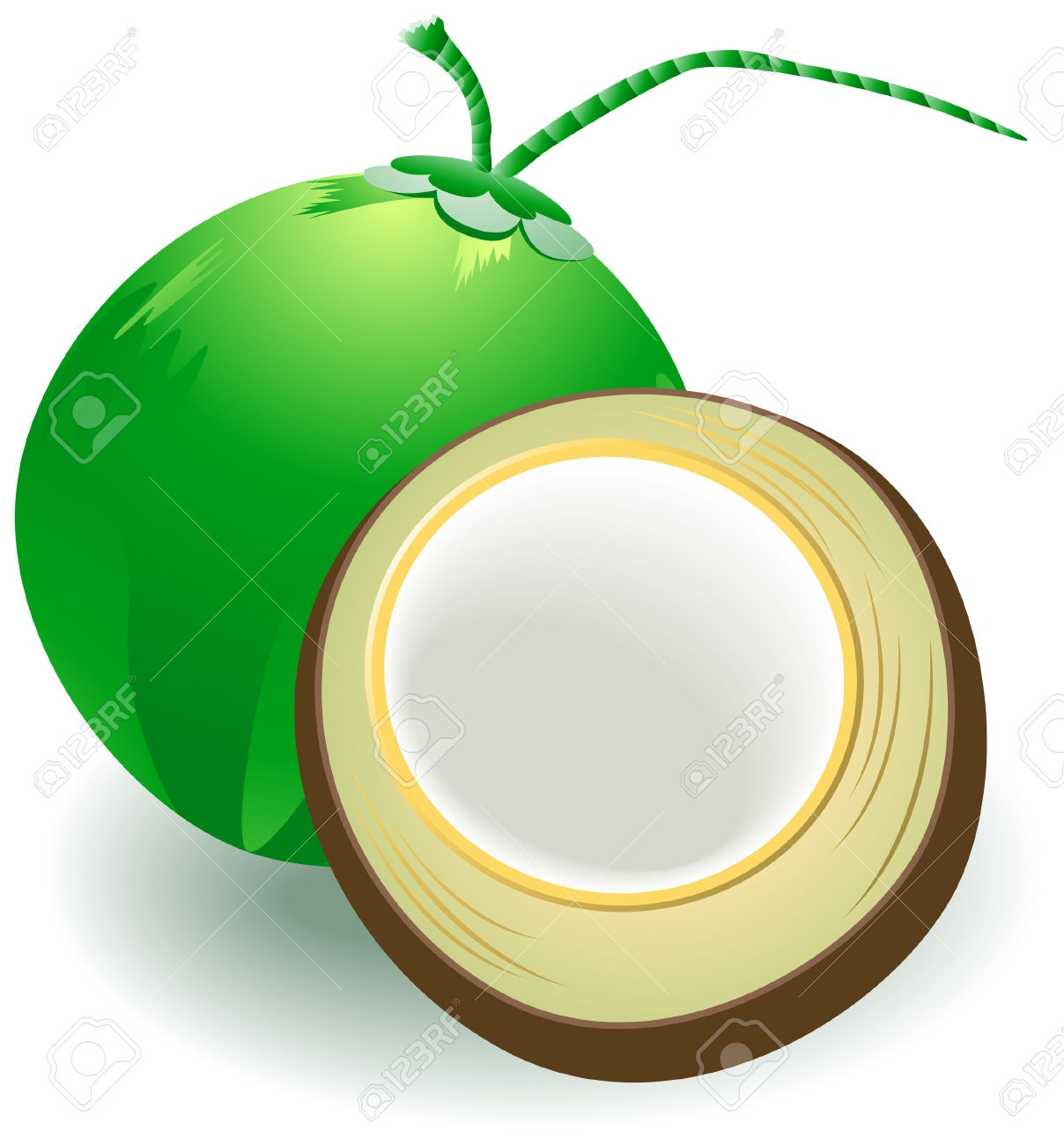 New design digital collection. Coconut clipart