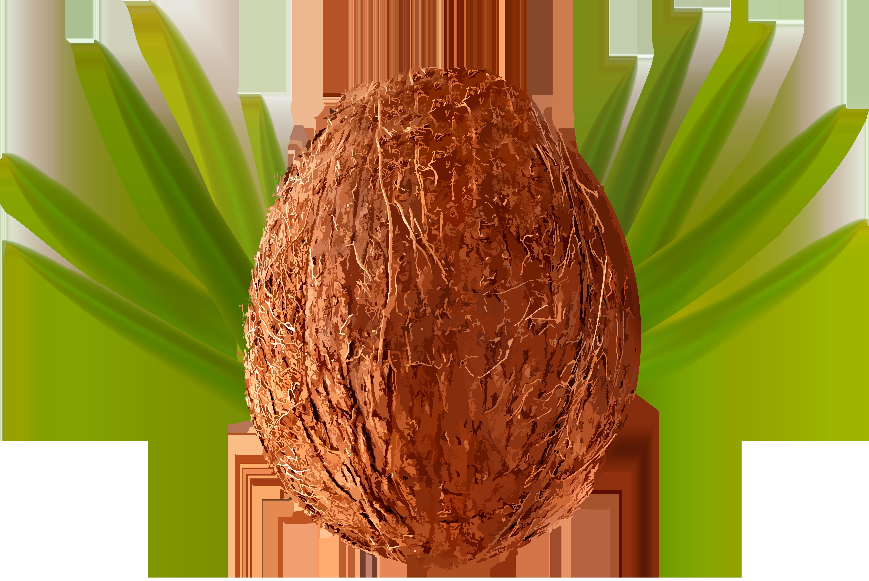 Transparent png clip art. Coconut clipart