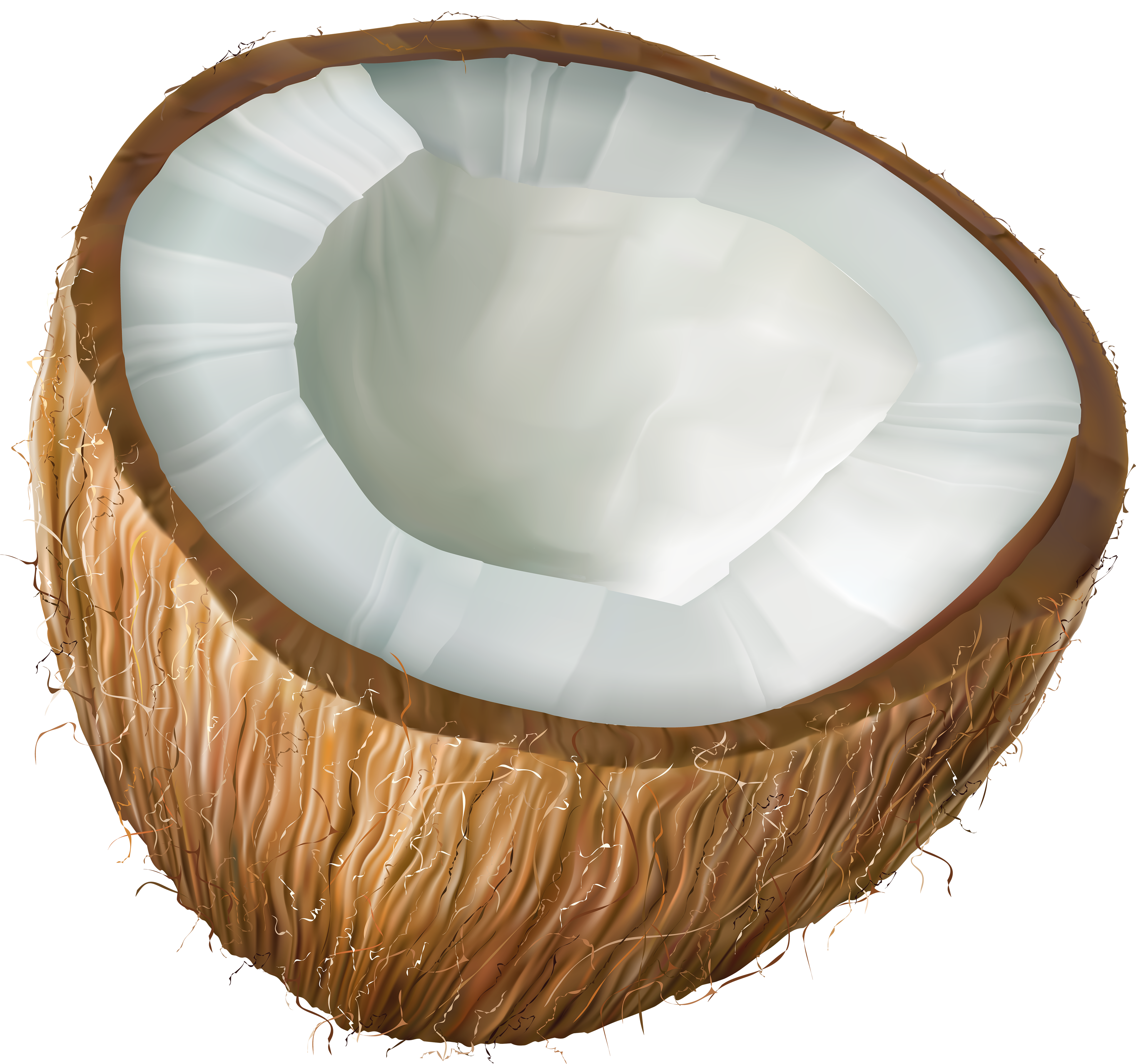 Coconut clipart. Transparent png clip art