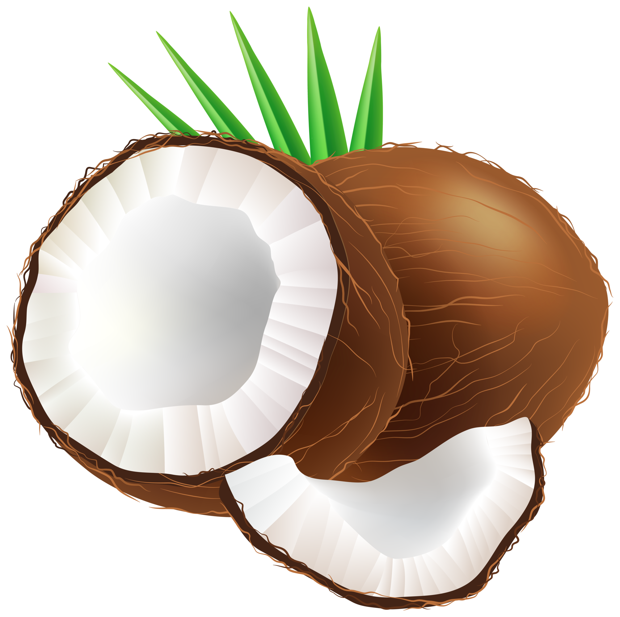 Png clip art . Tall clipart coconut tree