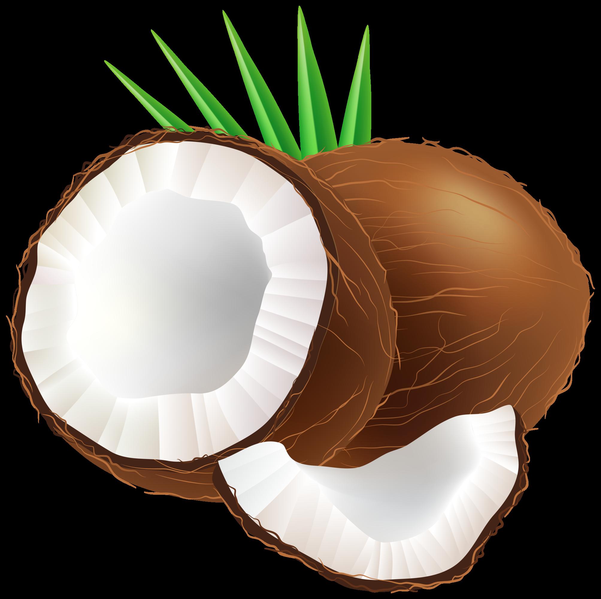 Png clip art . Coconut clipart