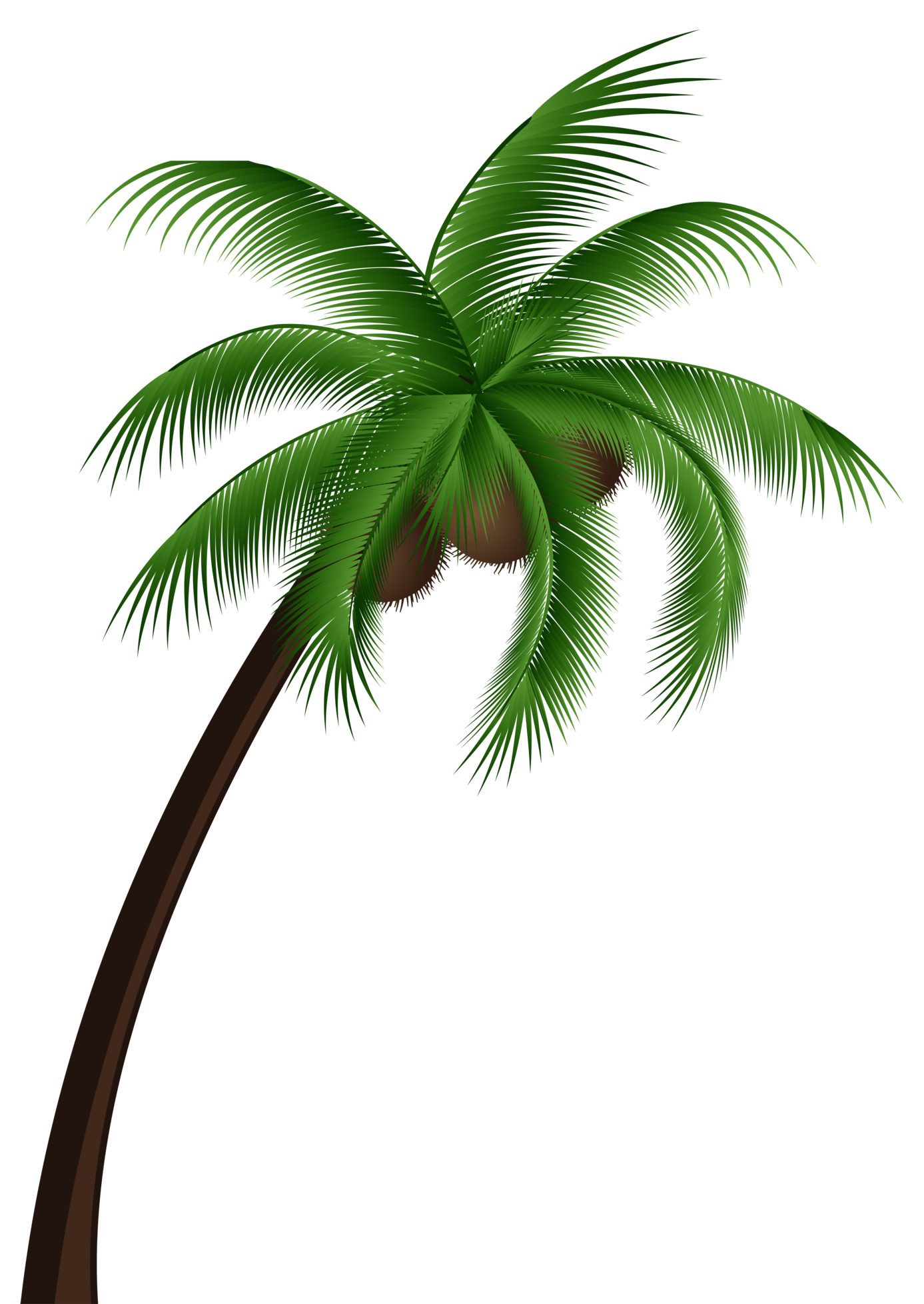 Coconut clipart. Palm tree png clip