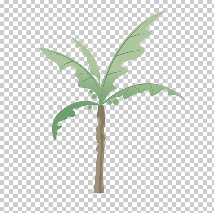 Tree png arecaceae . Coconut clipart branch