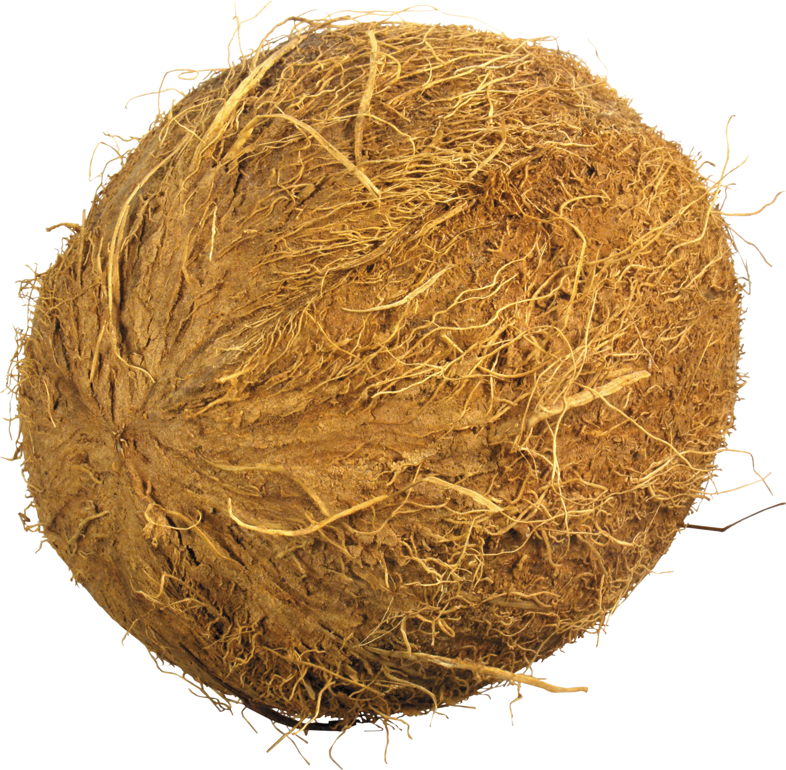 Png image without web. Coconut clipart clear background