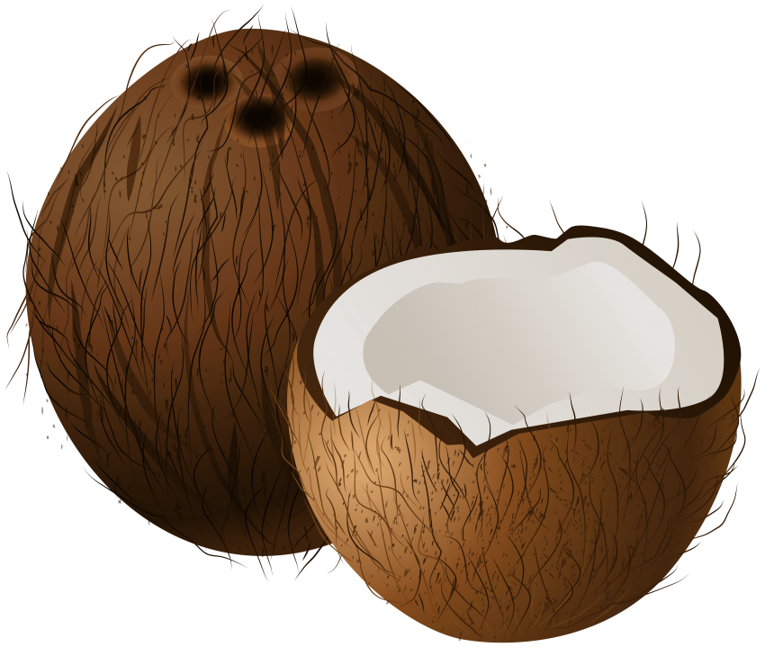 Coconut clipart clear background. Coconuts png free images