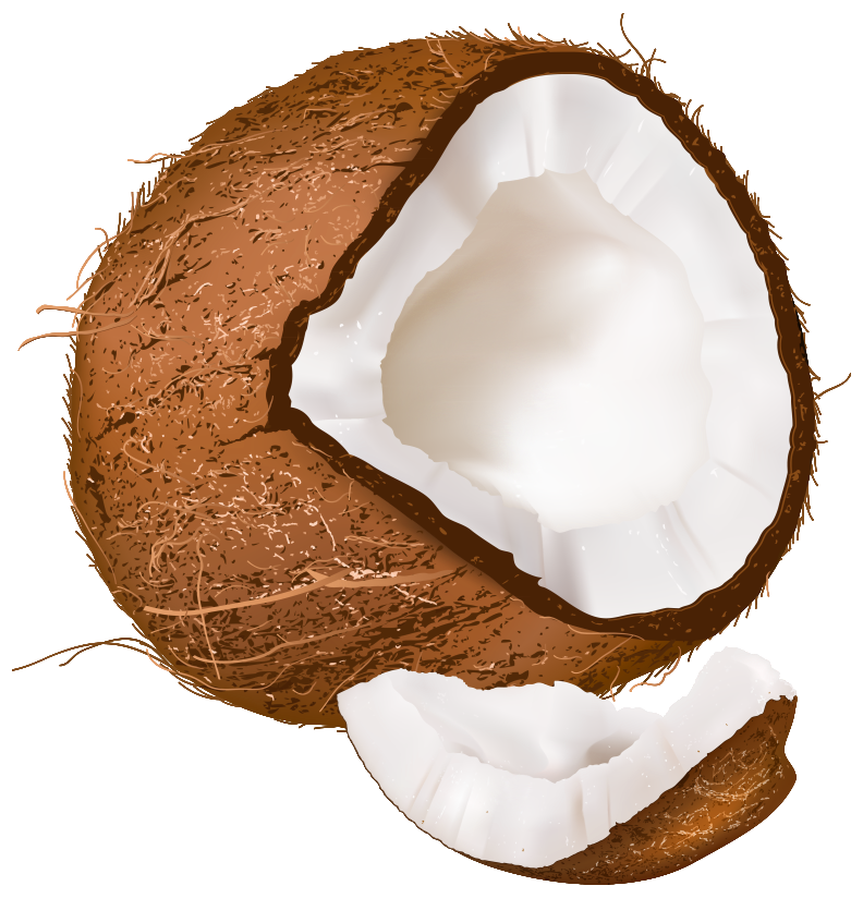 Coconut clipart clear background. Open png image gallery