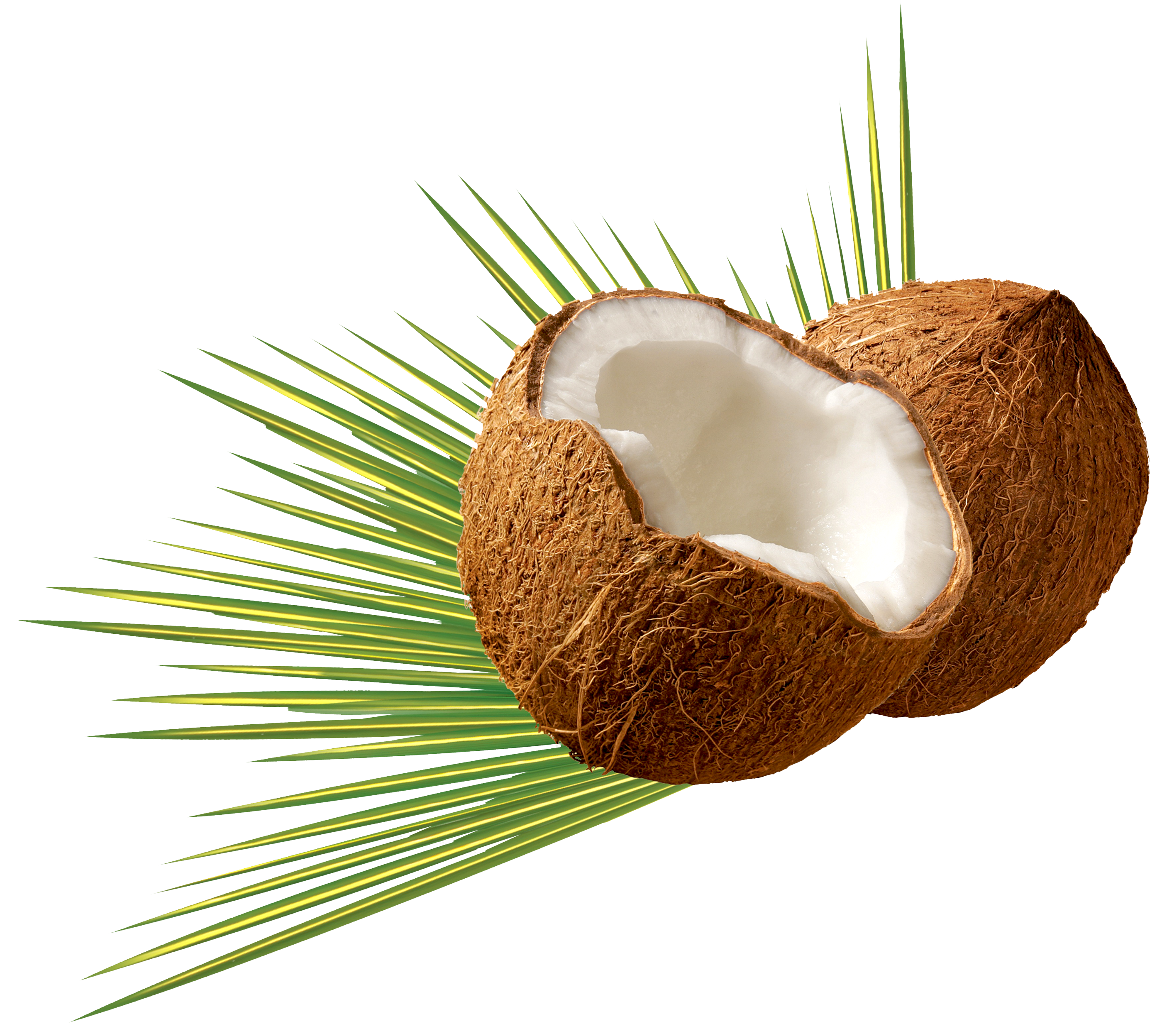 Png image pngpix . Coconut clipart coconut bunch