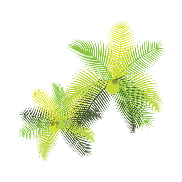 Tropical leaves with coconuts. Coconut clipart coconut bunch