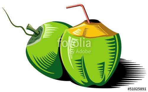 Coconut clipart coconut bunch. Vector stock image and