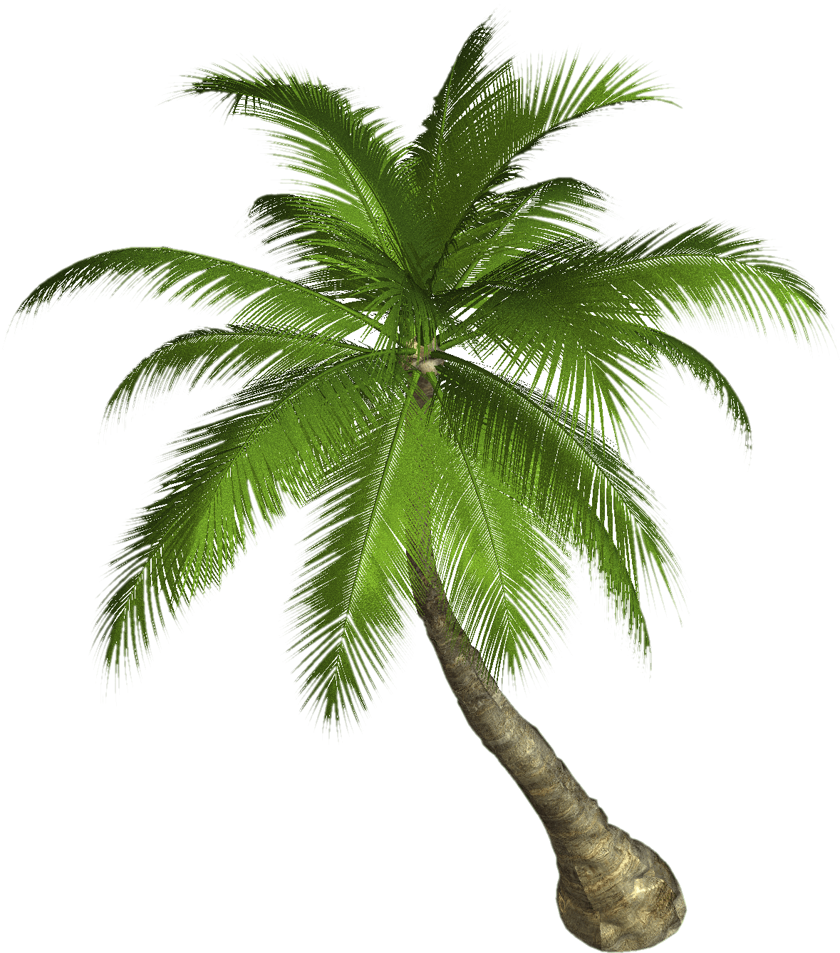Tree transparent png stickpng. Palm clipart royalty free