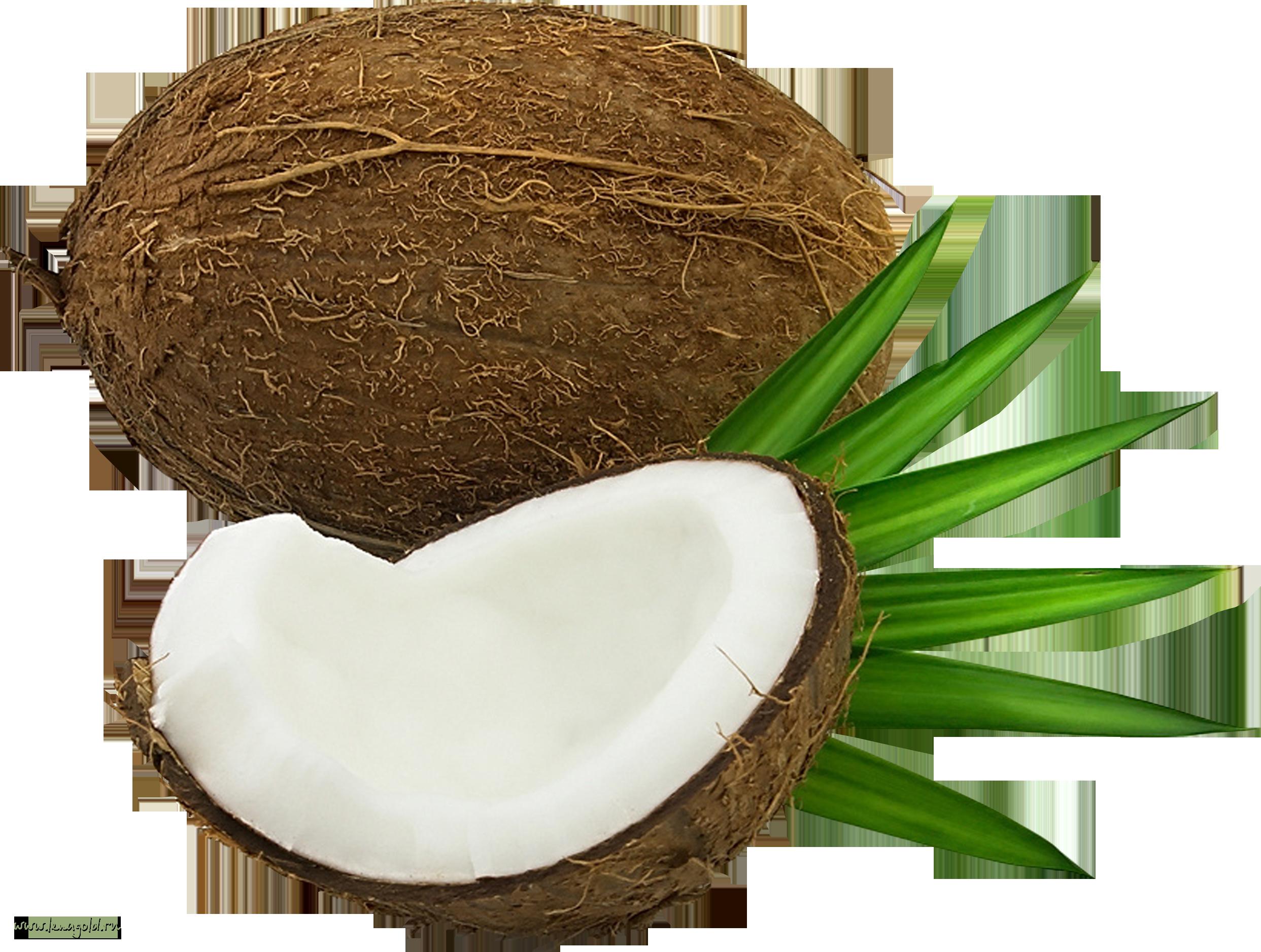 Coconut clipart coconut husk. Png image